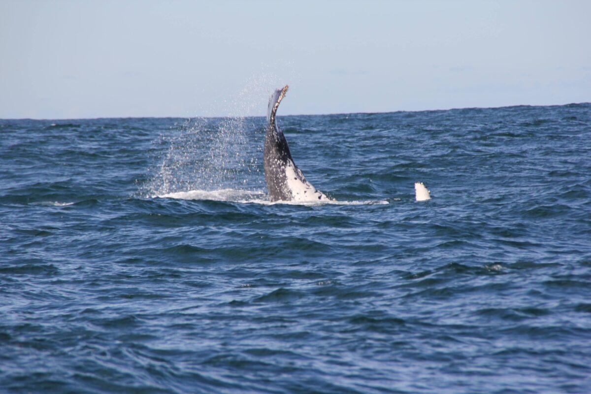 Veľryby